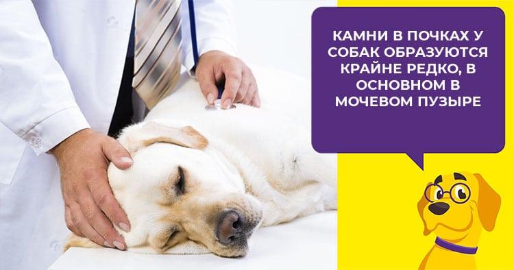 Какую кашу можно варить собаке