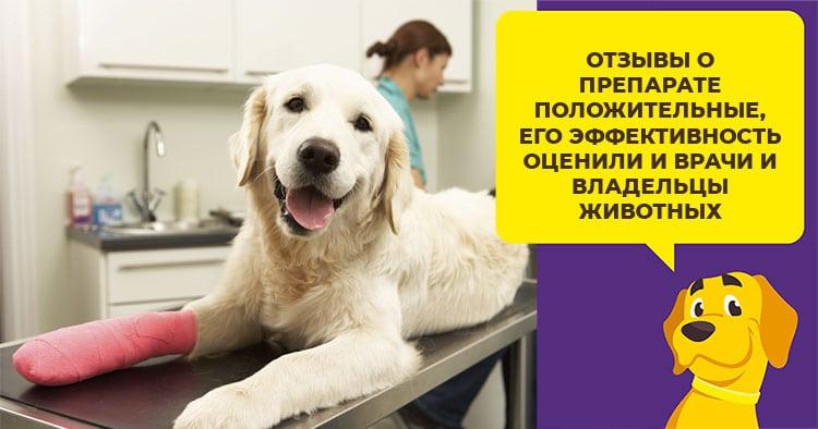 Как лечить различные виды лишая у собак и обезопасить себя от заражения