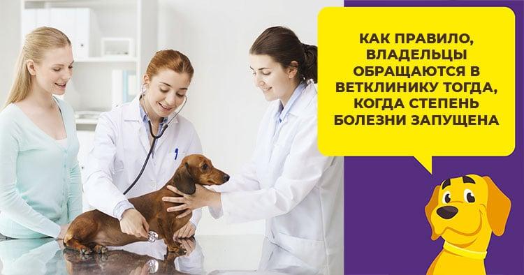 Смещение дисков позвоночника у собак