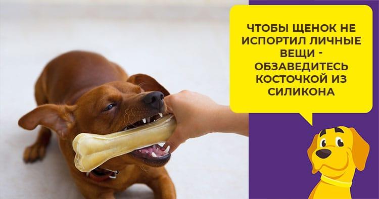 Зачем собаке развивающие игрушки и где их взять